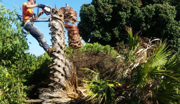 Contact Us-Palm Beach County Tree Trimming and Tree Removal Services-We Offer Tree Trimming Services, Tree Removal, Tree Pruning, Tree Cutting, Residential and Commercial Tree Trimming Services, Storm Damage, Emergency Tree Removal, Land Clearing, Tree Companies, Tree Care Service, Stump Grinding, and we're the Best Tree Trimming Company Near You Guaranteed!
