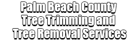 Palm Beach County Tree Trimming and Tree Removal Services