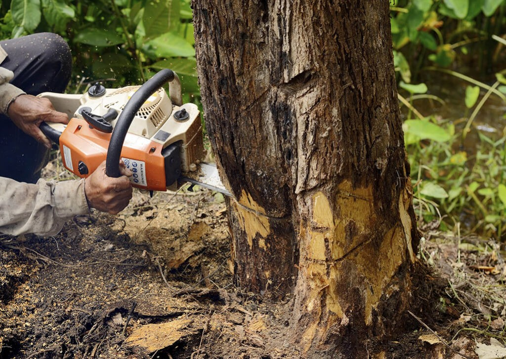Palm Beach County Tree Trimming and Tree Removal Services Main Header-We Offer Tree Trimming Services, Tree Removal, Tree Pruning, Tree Cutting, Residential and Commercial Tree Trimming Services, Storm Damage, Emergency Tree Removal, Land Clearing, Tree Companies, Tree Care Service, Stump Grinding, and we're the Best Tree Trimming Company Near You Guaranteed!