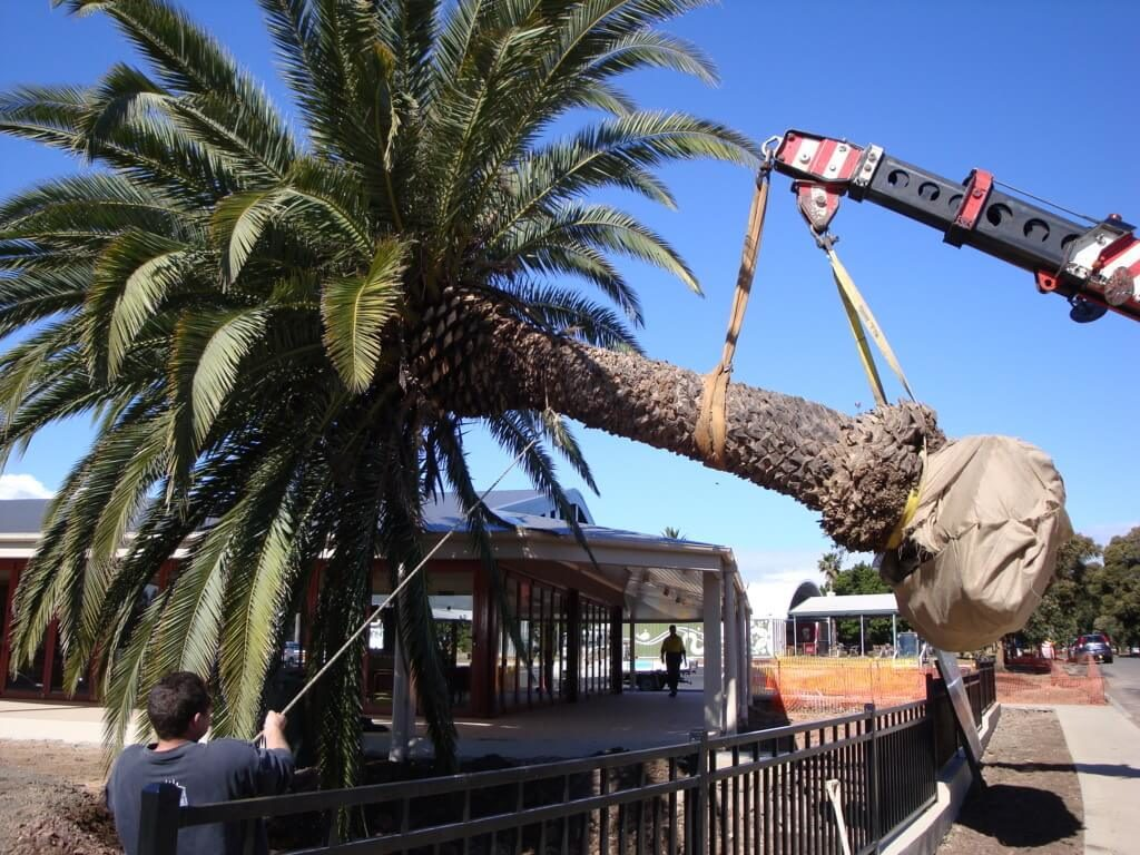 Palm Tree Removal-Palm Beach County Tree Trimming and Tree Removal Services-We Offer Tree Trimming Services, Tree Removal, Tree Pruning, Tree Cutting, Residential and Commercial Tree Trimming Services, Storm Damage, Emergency Tree Removal, Land Clearing, Tree Companies, Tree Care Service, Stump Grinding, and we're the Best Tree Trimming Company Near You Guaranteed!