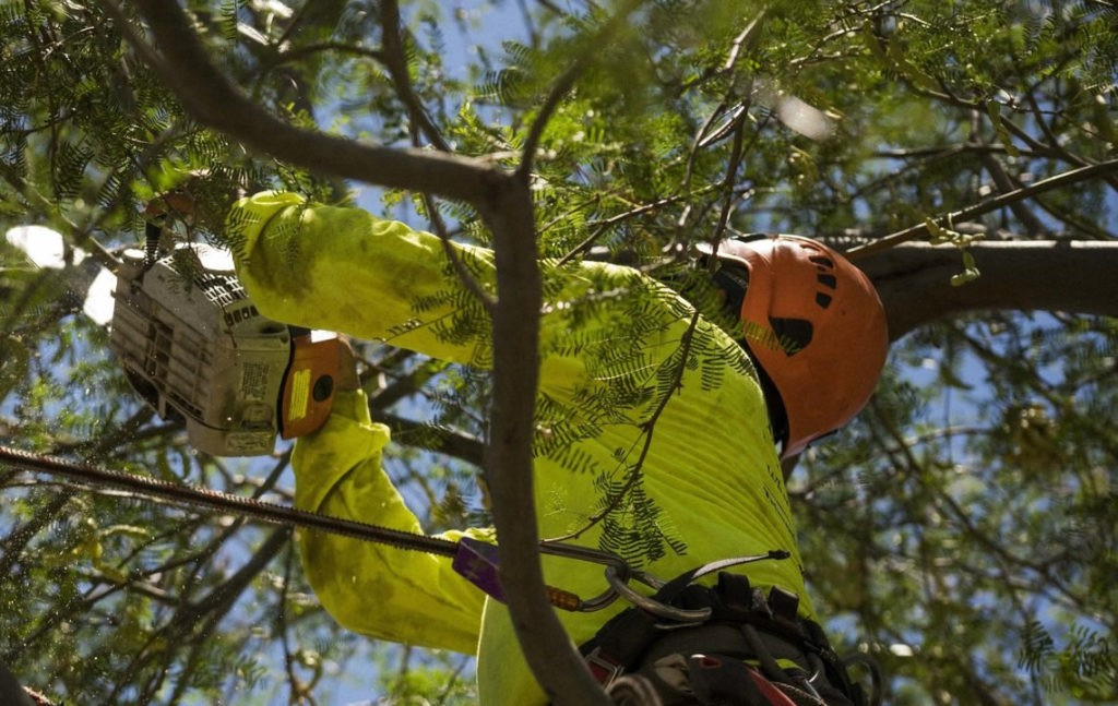 Residential Tree Services-Palm Beach County Tree Trimming and Tree Removal Services-We Offer Tree Trimming Services, Tree Removal, Tree Pruning, Tree Cutting, Residential and Commercial Tree Trimming Services, Storm Damage, Emergency Tree Removal, Land Clearing, Tree Companies, Tree Care Service, Stump Grinding, and we're the Best Tree Trimming Company Near You Guaranteed!