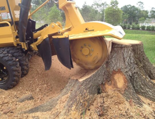 Stump Grinding-Palm Beach County Tree Trimming and Tree Removal Services-We Offer Tree Trimming Services, Tree Removal, Tree Pruning, Tree Cutting, Residential and Commercial Tree Trimming Services, Storm Damage, Emergency Tree Removal, Land Clearing, Tree Companies, Tree Care Service, Stump Grinding, and we're the Best Tree Trimming Company Near You Guaranteed!
