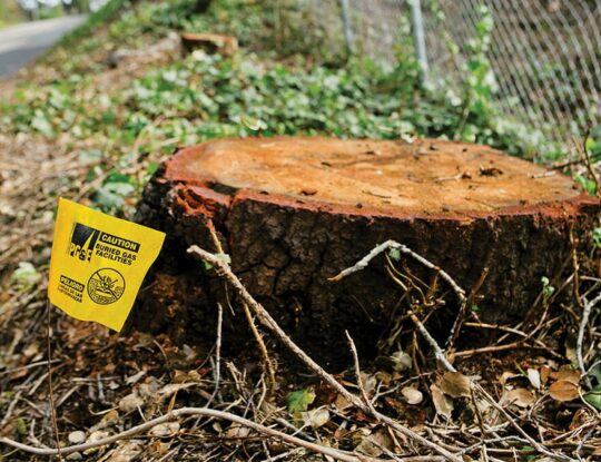 Stump Removal-Palm Beach County Tree Trimming and Tree Removal Services-We Offer Tree Trimming Services, Tree Removal, Tree Pruning, Tree Cutting, Residential and Commercial Tree Trimming Services, Storm Damage, Emergency Tree Removal, Land Clearing, Tree Companies, Tree Care Service, Stump Grinding, and we're the Best Tree Trimming Company Near You Guaranteed!