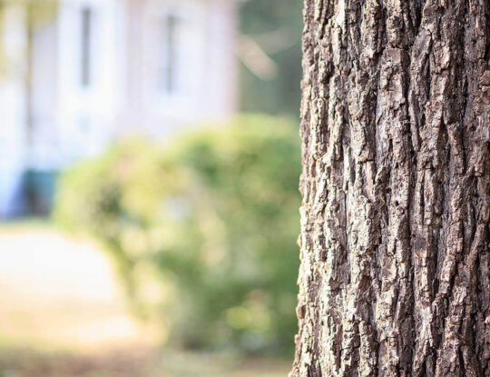 Tree Assessments-Palm Beach County Tree Trimming and Tree Removal Services-We Offer Tree Trimming Services, Tree Removal, Tree Pruning, Tree Cutting, Residential and Commercial Tree Trimming Services, Storm Damage, Emergency Tree Removal, Land Clearing, Tree Companies, Tree Care Service, Stump Grinding, and we're the Best Tree Trimming Company Near You Guaranteed!