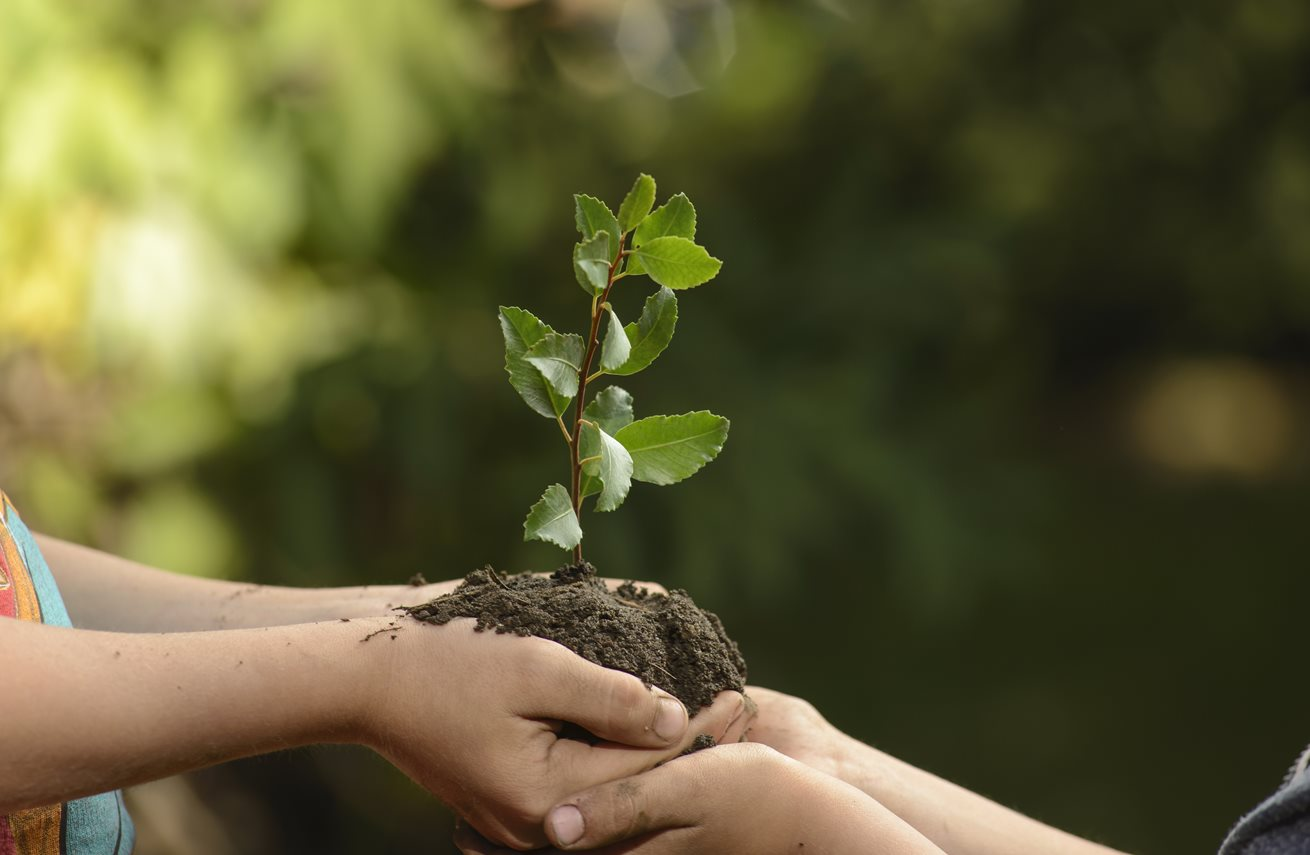 Tree Planting-Palm Beach County Tree Trimming and Tree Removal Services-We Offer Tree Trimming Services, Tree Removal, Tree Pruning, Tree Cutting, Residential and Commercial Tree Trimming Services, Storm Damage, Emergency Tree Removal, Land Clearing, Tree Companies, Tree Care Service, Stump Grinding, and we're the Best Tree Trimming Company Near You Guaranteed!