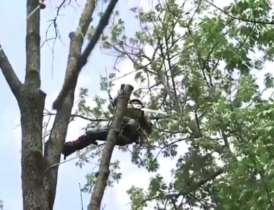 Tree Trimming-Palm Beach County Tree Trimming and Tree Removal Services-We Offer Tree Trimming Services, Tree Removal, Tree Pruning, Tree Cutting, Residential and Commercial Tree Trimming Services, Storm Damage, Emergency Tree Removal, Land Clearing, Tree Companies, Tree Care Service, Stump Grinding, and we're the Best Tree Trimming Company Near You Guaranteed!
