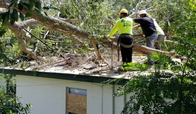 Atlantis-Palm Beach County Tree Trimming and Tree Removal Services-We Offer Tree Trimming Services, Tree Removal, Tree Pruning, Tree Cutting, Residential and Commercial Tree Trimming Services, Storm Damage, Emergency Tree Removal, Land Clearing, Tree Companies, Tree Care Service, Stump Grinding, and we're the Best Tree Trimming Company Near You Guaranteed!