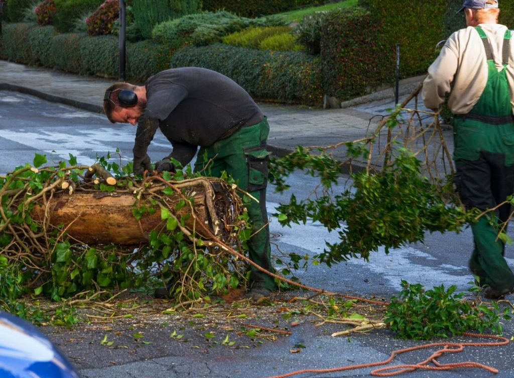 Greenacres-Palm Beach County Tree Trimming and Tree Removal Services-We Offer Tree Trimming Services, Tree Removal, Tree Pruning, Tree Cutting, Residential and Commercial Tree Trimming Services, Storm Damage, Emergency Tree Removal, Land Clearing, Tree Companies, Tree Care Service, Stump Grinding, and we're the Best Tree Trimming Company Near You Guaranteed!