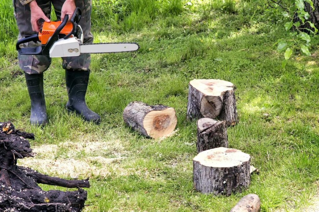 Juno Beach-Palm Beach County Tree Trimming and Tree Removal Services-We Offer Tree Trimming Services, Tree Removal, Tree Pruning, Tree Cutting, Residential and Commercial Tree Trimming Services, Storm Damage, Emergency Tree Removal, Land Clearing, Tree Companies, Tree Care Service, Stump Grinding, and we're the Best Tree Trimming Company Near You Guaranteed!
