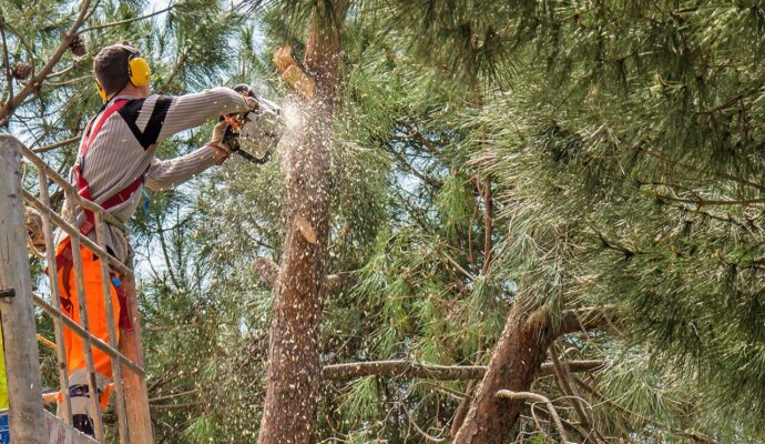 Jupiter-Palm Beach County Tree Trimming and Tree Removal Services-We Offer Tree Trimming Services, Tree Removal, Tree Pruning, Tree Cutting, Residential and Commercial Tree Trimming Services, Storm Damage, Emergency Tree Removal, Land Clearing, Tree Companies, Tree Care Service, Stump Grinding, and we're the Best Tree Trimming Company Near You Guaranteed!