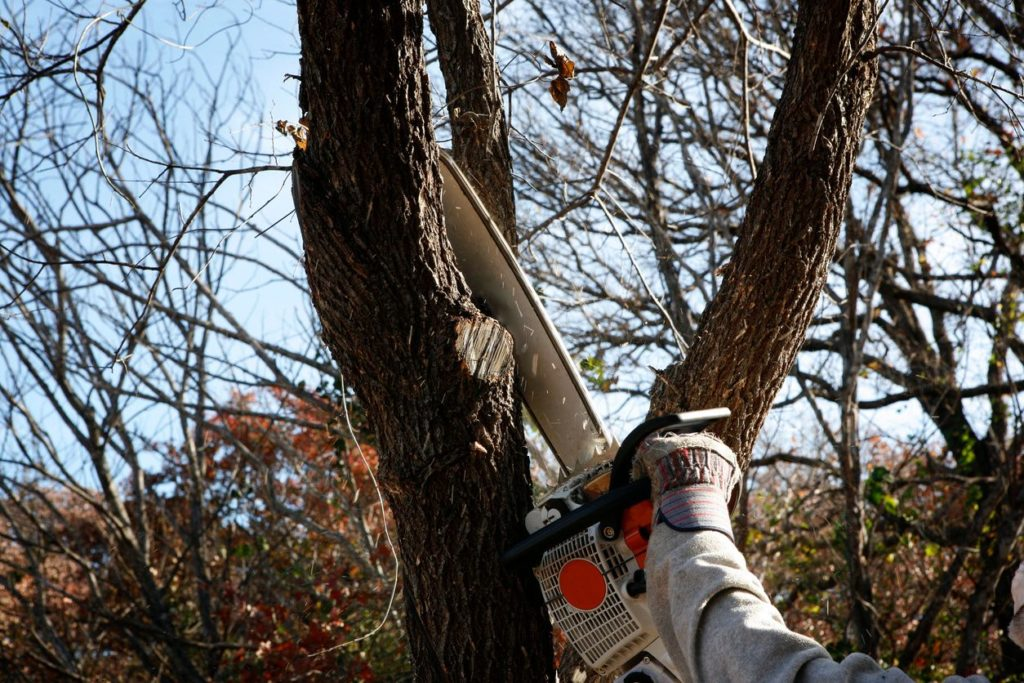 North Palm Beach-Palm Beach County Tree Trimming and Tree Removal Services-We Offer Tree Trimming Services, Tree Removal, Tree Pruning, Tree Cutting, Residential and Commercial Tree Trimming Services, Storm Damage, Emergency Tree Removal, Land Clearing, Tree Companies, Tree Care Service, Stump Grinding, and we're the Best Tree Trimming Company Near You Guaranteed!
