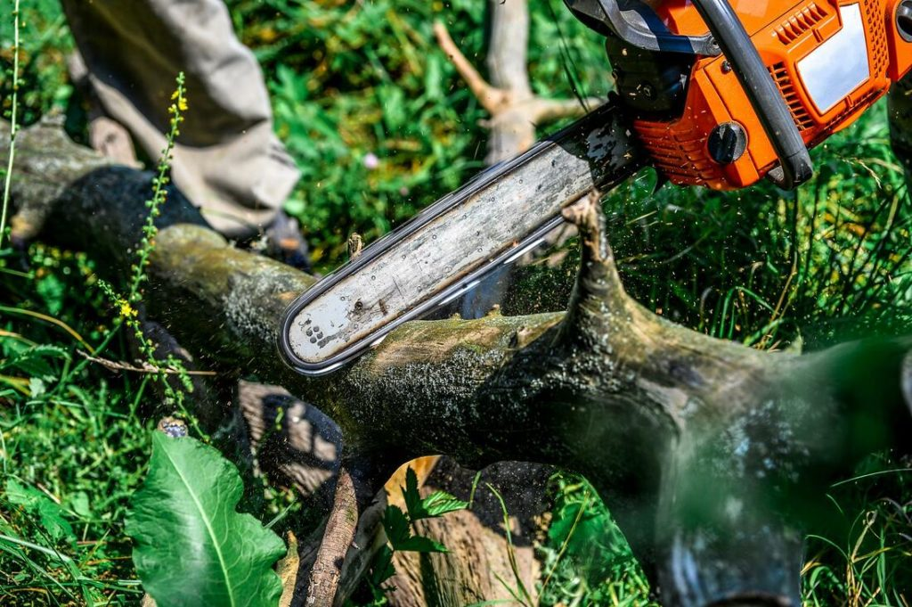 Ocean Ridge-Palm Beach County Tree Trimming and Tree Removal Services-We Offer Tree Trimming Services, Tree Removal, Tree Pruning, Tree Cutting, Residential and Commercial Tree Trimming Services, Storm Damage, Emergency Tree Removal, Land Clearing, Tree Companies, Tree Care Service, Stump Grinding, and we're the Best Tree Trimming Company Near You Guaranteed!