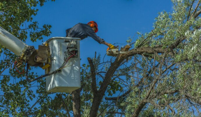 Palm Beach County-Palm Beach County Tree Trimming and Tree Removal Services-We Offer Tree Trimming Services, Tree Removal, Tree Pruning, Tree Cutting, Residential and Commercial Tree Trimming Services, Storm Damage, Emergency Tree Removal, Land Clearing, Tree Companies, Tree Care Service, Stump Grinding, and we're the Best Tree Trimming Company Near You Guaranteed!