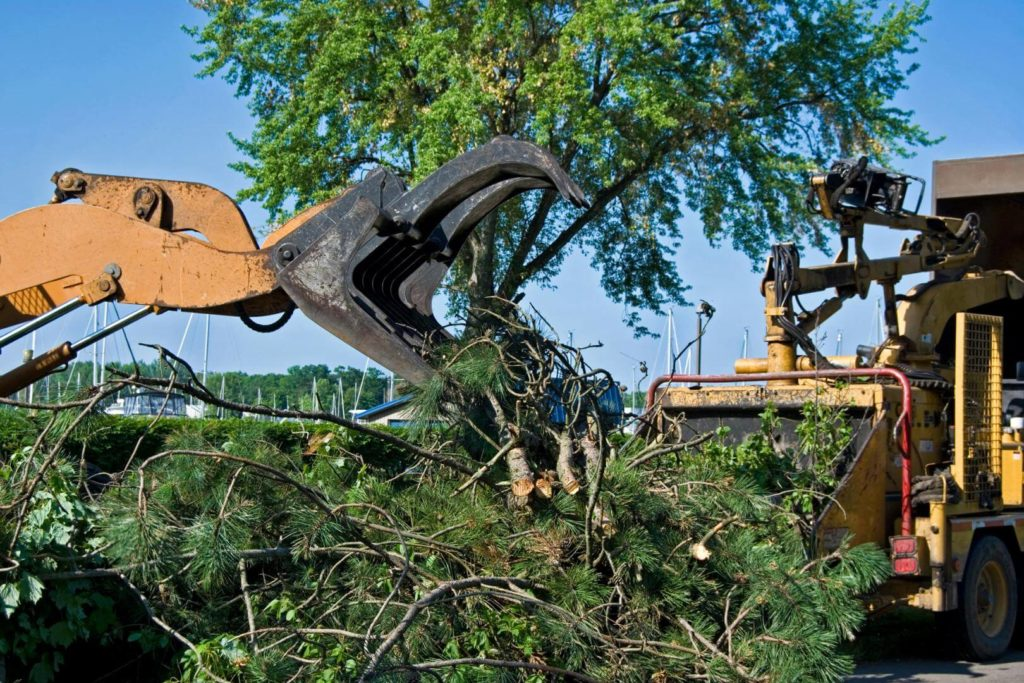 Palm Beach Gardens-Palm Beach County Tree Trimming and Tree Removal Services-We Offer Tree Trimming Services, Tree Removal, Tree Pruning, Tree Cutting, Residential and Commercial Tree Trimming Services, Storm Damage, Emergency Tree Removal, Land Clearing, Tree Companies, Tree Care Service, Stump Grinding, and we're the Best Tree Trimming Company Near You Guaranteed!