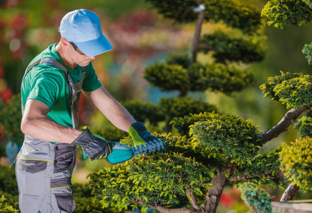 Palm Springs-Palm Beach County Tree Trimming and Tree Removal Services-We Offer Tree Trimming Services, Tree Removal, Tree Pruning, Tree Cutting, Residential and Commercial Tree Trimming Services, Storm Damage, Emergency Tree Removal, Land Clearing, Tree Companies, Tree Care Service, Stump Grinding, and we're the Best Tree Trimming Company Near You Guaranteed!