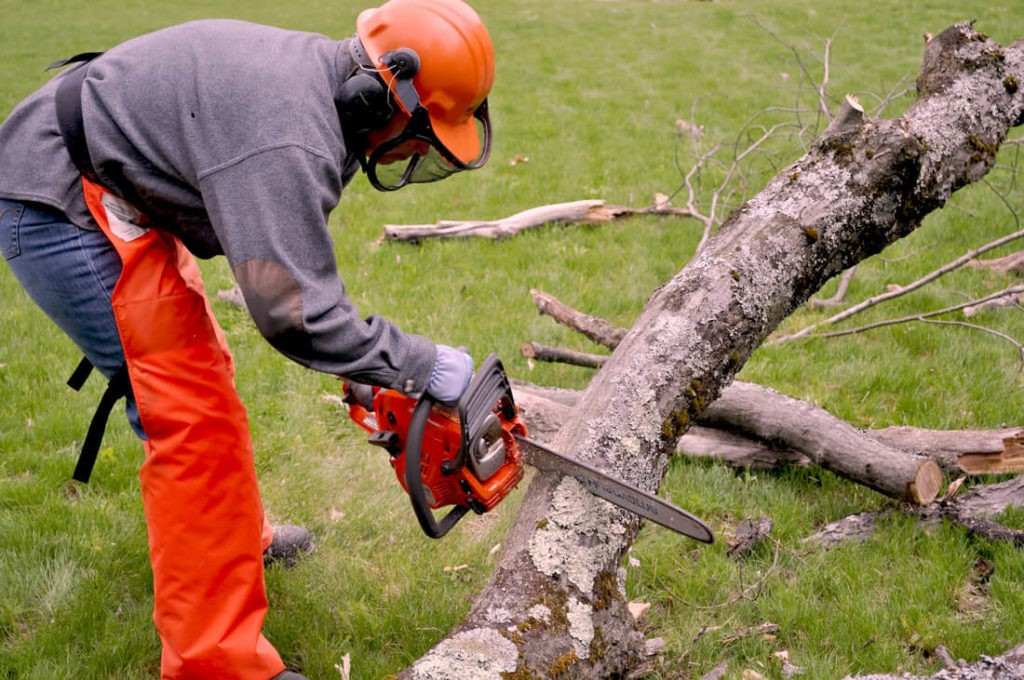 West Palm Beach-Palm Beach County Tree Trimming and Tree Removal Services-We Offer Tree Trimming Services, Tree Removal, Tree Pruning, Tree Cutting, Residential and Commercial Tree Trimming Services, Storm Damage, Emergency Tree Removal, Land Clearing, Tree Companies, Tree Care Service, Stump Grinding, and we're the Best Tree Trimming Company Near You Guaranteed!