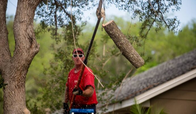 Affordable tree service near me-Palm Beach County Tree Trimming and Tree Removal Services-We Offer Tree Trimming Services, Tree Removal, Tree Pruning, Tree Cutting, Residential and Commercial Tree Trimming Services, Storm Damage, Emergency Tree Removal, Land Clearing, Tree Companies, Tree Care Service, Stump Grinding, and we're the Best Tree Trimming Company Near You Guaranteed!