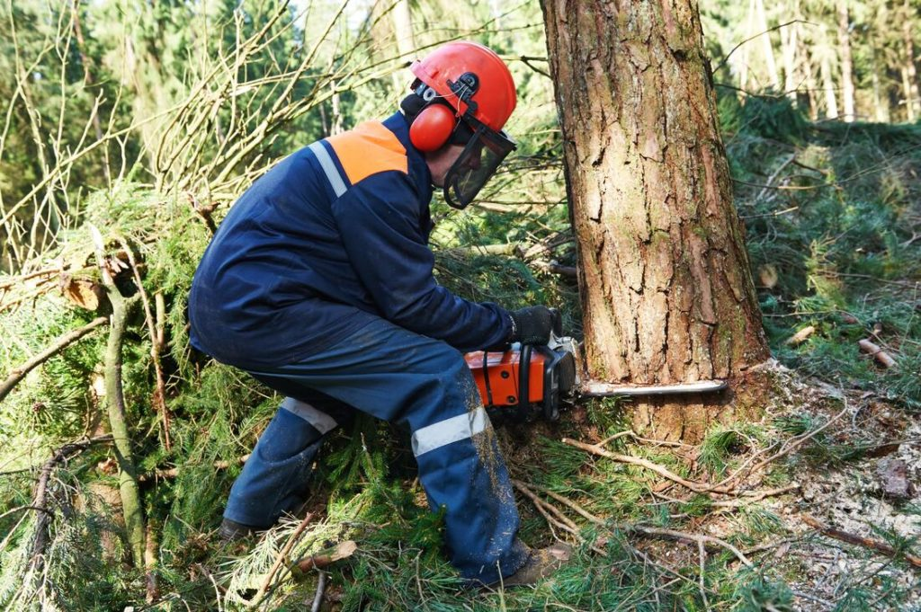 Affordable tree services-Palm Beach County Tree Trimming and Tree Removal Services-We Offer Tree Trimming Services, Tree Removal, Tree Pruning, Tree Cutting, Residential and Commercial Tree Trimming Services, Storm Damage, Emergency Tree Removal, Land Clearing, Tree Companies, Tree Care Service, Stump Grinding, and we're the Best Tree Trimming Company Near You Guaranteed!