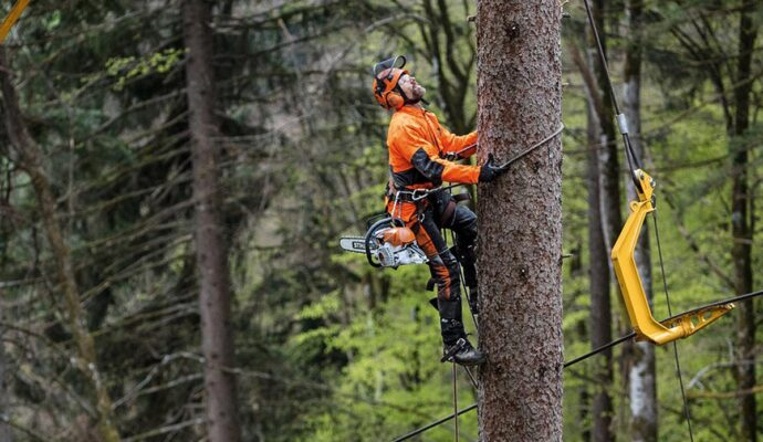 Arborist-Palm Beach County Tree Trimming and Tree Removal Services-We Offer Tree Trimming Services, Tree Removal, Tree Pruning, Tree Cutting, Residential and Commercial Tree Trimming Services, Storm Damage, Emergency Tree Removal, Land Clearing, Tree Companies, Tree Care Service, Stump Grinding, and we're the Best Tree Trimming Company Near You Guaranteed!
