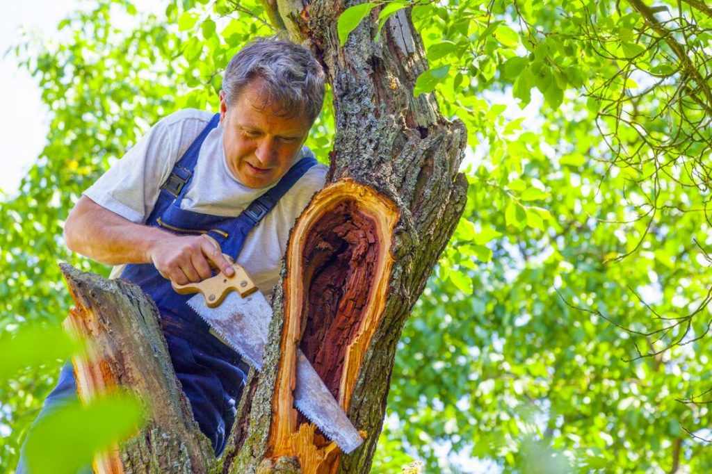 Arborist tree service-Palm Beach County Tree Trimming and Tree Removal Services-We Offer Tree Trimming Services, Tree Removal, Tree Pruning, Tree Cutting, Residential and Commercial Tree Trimming Services, Storm Damage, Emergency Tree Removal, Land Clearing, Tree Companies, Tree Care Service, Stump Grinding, and we're the Best Tree Trimming Company Near You Guaranteed!