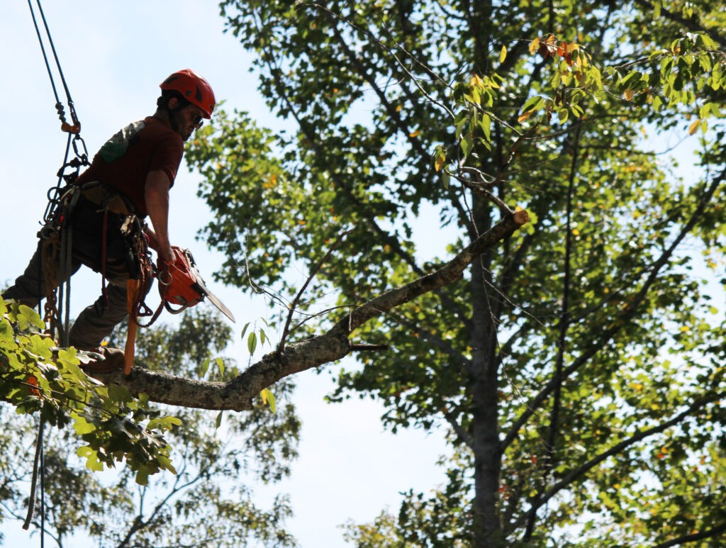 Arborist tree trimming-Palm Beach County Tree Trimming and Tree Removal Services-We Offer Tree Trimming Services, Tree Removal, Tree Pruning, Tree Cutting, Residential and Commercial Tree Trimming Services, Storm Damage, Emergency Tree Removal, Land Clearing, Tree Companies, Tree Care Service, Stump Grinding, and we're the Best Tree Trimming Company Near You Guaranteed!