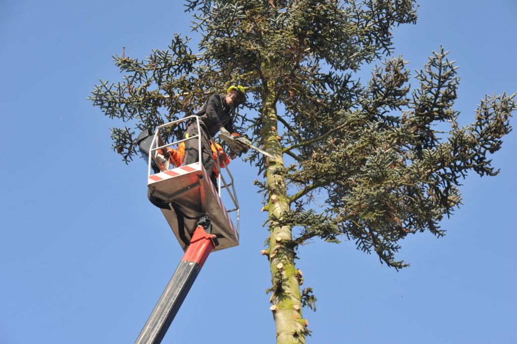 Best Cost for Tree Trimming-Palm Beach County Tree Trimming and Tree Removal Services-We Offer Tree Trimming Services, Tree Removal, Tree Pruning, Tree Cutting, Residential and Commercial Tree Trimming Services, Storm Damage, Emergency Tree Removal, Land Clearing, Tree Companies, Tree Care Service, Stump Grinding, and we're the Best Tree Trimming Company Near You Guaranteed!