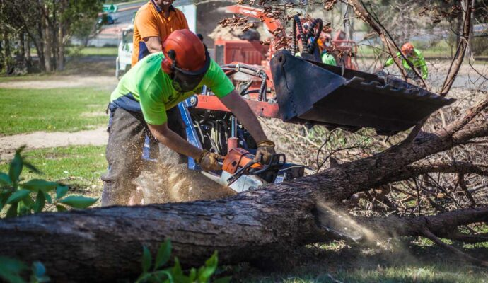 Best Tree Trimming Services-Palm Beach County Tree Trimming and Tree Removal Services-We Offer Tree Trimming Services, Tree Removal, Tree Pruning, Tree Cutting, Residential and Commercial Tree Trimming Services, Storm Damage, Emergency Tree Removal, Land Clearing, Tree Companies, Tree Care Service, Stump Grinding, and we're the Best Tree Trimming Company Near You Guaranteed!