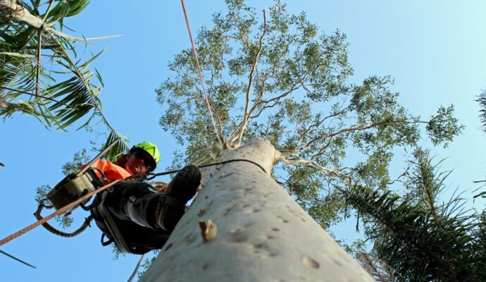Best arborists-Palm Beach County Tree Trimming and Tree Removal Services-We Offer Tree Trimming Services, Tree Removal, Tree Pruning, Tree Cutting, Residential and Commercial Tree Trimming Services, Storm Damage, Emergency Tree Removal, Land Clearing, Tree Companies, Tree Care Service, Stump Grinding, and we're the Best Tree Trimming Company Near You Guaranteed!