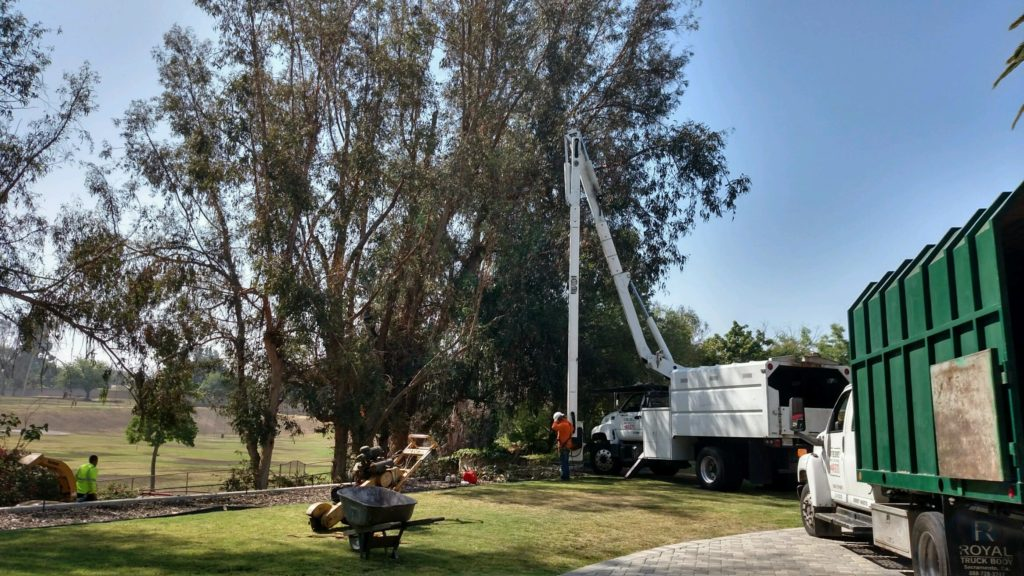 Commercial Tree Services Near Me Palm Beach County--Palm Beach County Tree Trimming and Tree Removal Services-We Offer Tree Trimming Services, Tree Removal, Tree Pruning, Tree Cutting, Residential and Commercial Tree Trimming Services, Storm Damage, Emergency Tree Removal, Land Clearing, Tree Companies, Tree Care Service, Stump Grinding, and we're the Best Tree Trimming Company Near You Guaranteed!