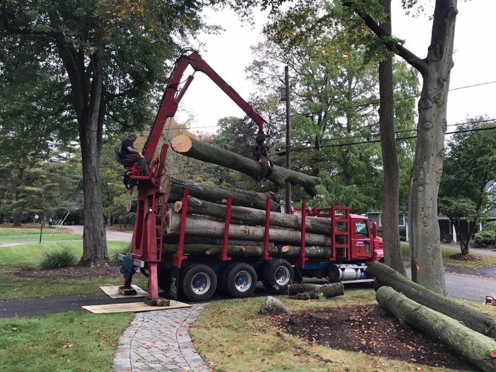 Commercial Tree Services Near Me-Palm Beach County Tree Trimming and Tree Removal Services-We Offer Tree Trimming Services, Tree Removal, Tree Pruning, Tree Cutting, Residential and Commercial Tree Trimming Services, Storm Damage, Emergency Tree Removal, Land Clearing, Tree Companies, Tree Care Service, Stump Grinding, and we're the Best Tree Trimming Company Near You Guaranteed!