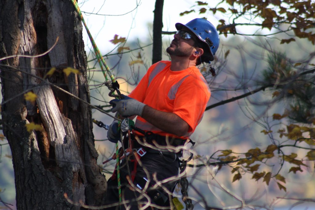 Cost for Tree Pruning-Palm Beach County Tree Trimming and Tree Removal Services-We Offer Tree Trimming Services, Tree Removal, Tree Pruning, Tree Cutting, Residential and Commercial Tree Trimming Services, Storm Damage, Emergency Tree Removal, Land Clearing, Tree Companies, Tree Care Service, Stump Grinding, and we're the Best Tree Trimming Company Near You Guaranteed!