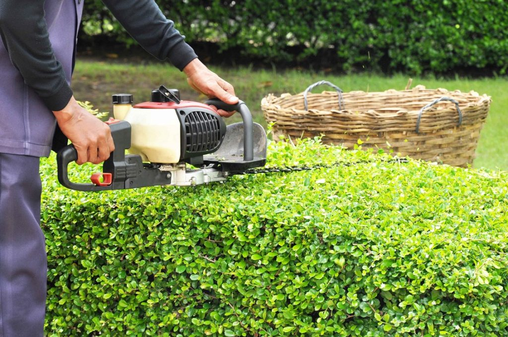 Cost for Tree Trimming-Palm Beach County Tree Trimming and Tree Removal Services-We Offer Tree Trimming Services, Tree Removal, Tree Pruning, Tree Cutting, Residential and Commercial Tree Trimming Services, Storm Damage, Emergency Tree Removal, Land Clearing, Tree Companies, Tree Care Service, Stump Grinding, and we're the Best Tree Trimming Company Near You Guaranteed!