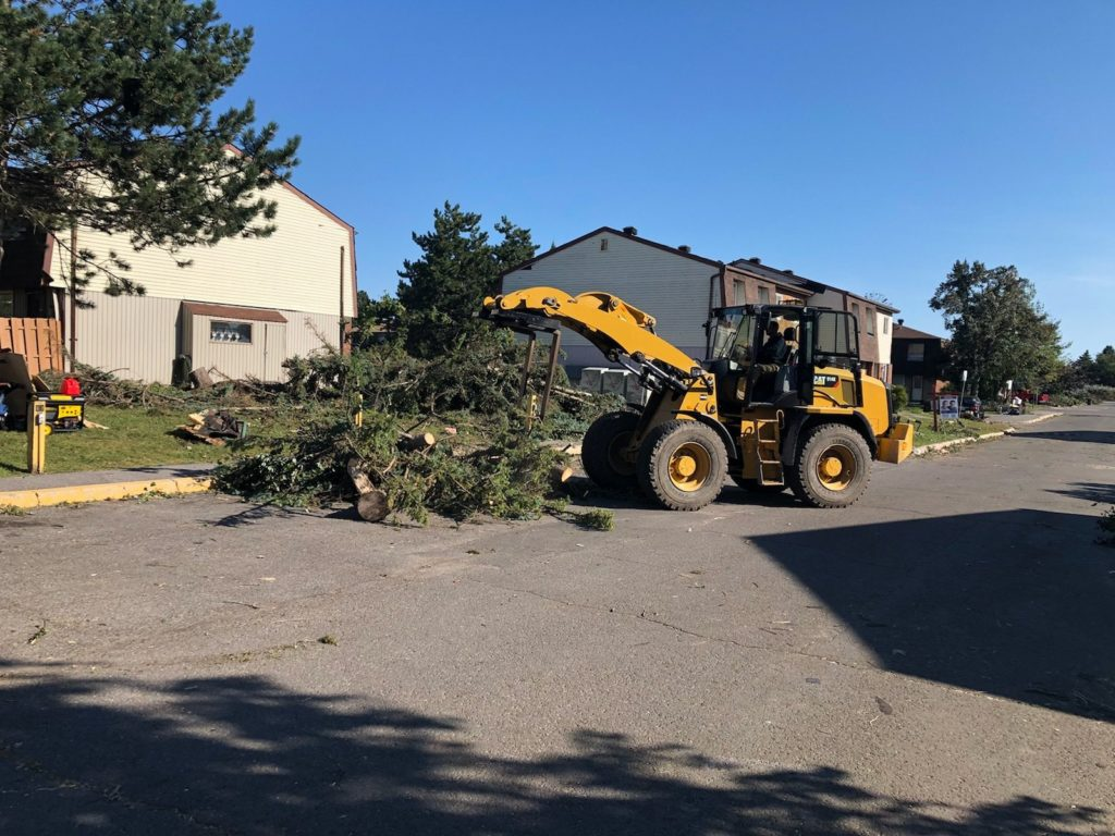 Cost tree removal-Palm Beach County Tree Trimming and Tree Removal Services-We Offer Tree Trimming Services, Tree Removal, Tree Pruning, Tree Cutting, Residential and Commercial Tree Trimming Services, Storm Damage, Emergency Tree Removal, Land Clearing, Tree Companies, Tree Care Service, Stump Grinding, and we're the Best Tree Trimming Company Near You Guaranteed!