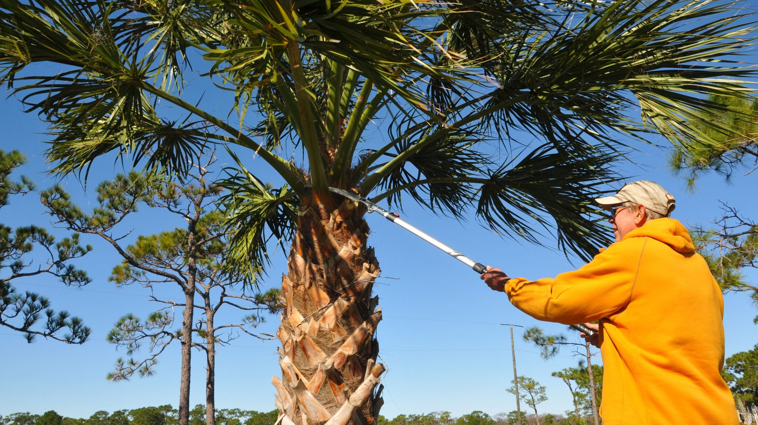 How Much Does Palm Tree Trimming Cost-Palm Beach County Tree Trimming and Tree Removal Services-We Offer Tree Trimming Services, Tree Removal, Tree Pruning, Tree Cutting, Residential and Commercial Tree Trimming Services, Storm Damage, Emergency Tree Removal, Land Clearing, Tree Companies, Tree Care Service, Stump Grinding, and we're the Best Tree Trimming Company Near You Guaranteed!