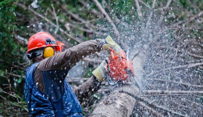 How Much Does Tree Trimming Cost-Palm Beach County Tree Trimming and Tree Removal Services-We Offer Tree Trimming Services, Tree Removal, Tree Pruning, Tree Cutting, Residential and Commercial Tree Trimming Services, Storm Damage, Emergency Tree Removal, Land Clearing, Tree Companies, Tree Care Service, Stump Grinding, and we're the Best Tree Trimming Company Near You Guaranteed!