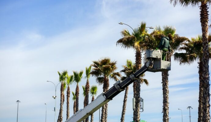 How much does it cost to trim a palm tree-Palm Beach County Tree Trimming and Tree Removal Services-We Offer Tree Trimming Services, Tree Removal, Tree Pruning, Tree Cutting, Residential and Commercial Tree Trimming Services, Storm Damage, Emergency Tree Removal, Land Clearing, Tree Companies, Tree Care Service, Stump Grinding, and we're the Best Tree Trimming Company Near You Guaranteed!