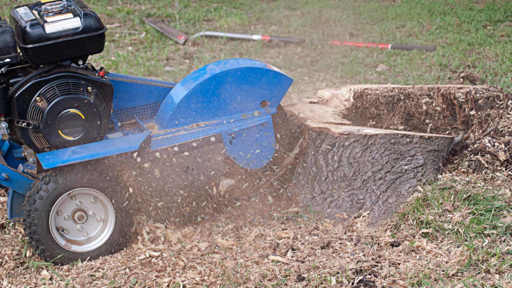 How much does stump grinding cost-Palm Beach County Tree Trimming and Tree Removal Services-We Offer Tree Trimming Services, Tree Removal, Tree Pruning, Tree Cutting, Residential and Commercial Tree Trimming Services, Storm Damage, Emergency Tree Removal, Land Clearing, Tree Companies, Tree Care Service, Stump Grinding, and we're the Best Tree Trimming Company Near You Guaranteed!
