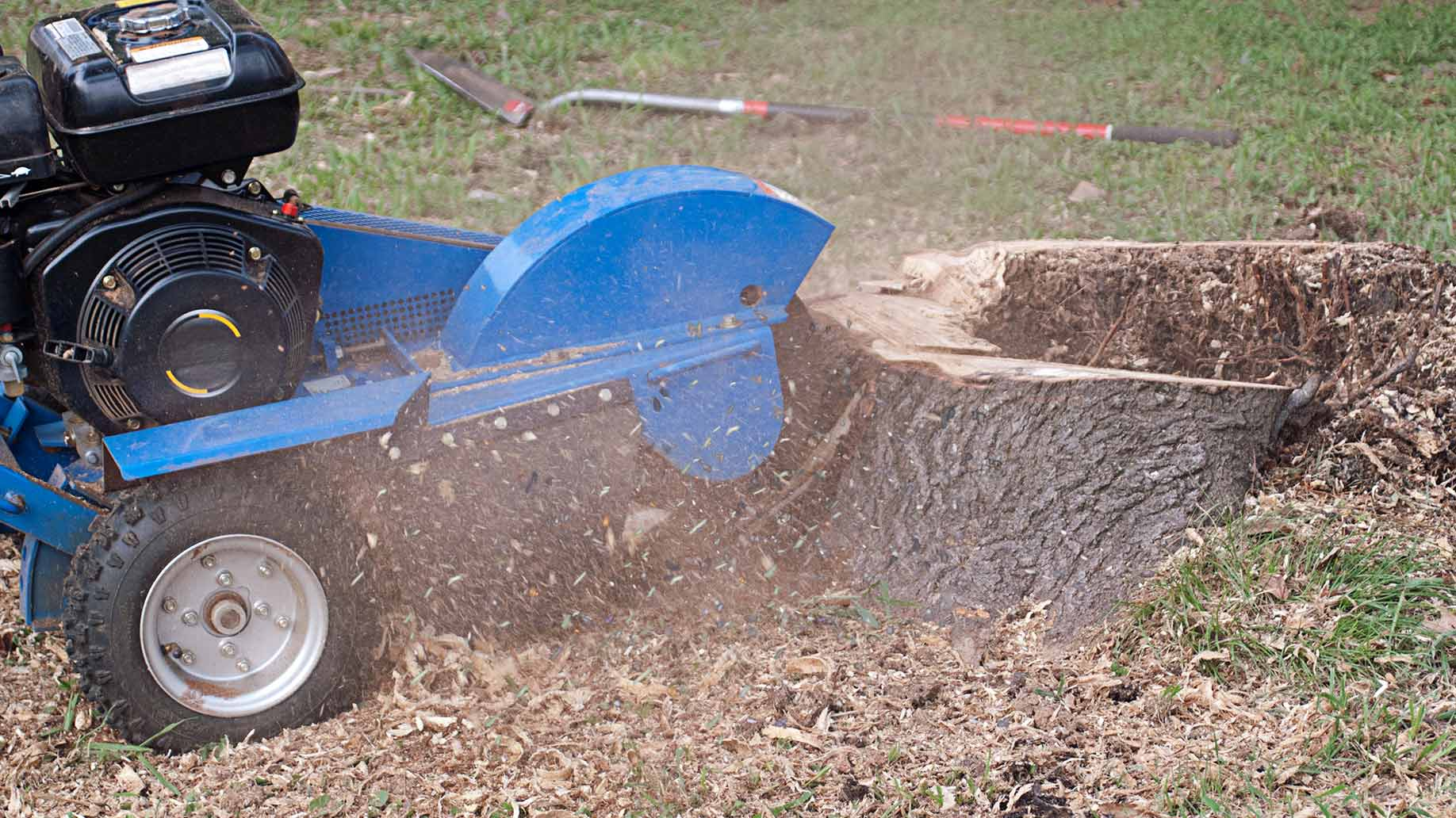 How much does stump grinding cost - Palm Beach County Tree ...