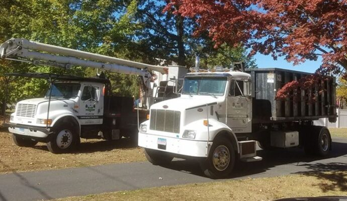 How much does tree removal cost-Palm Beach County Tree Trimming and Tree Removal Services-We Offer Tree Trimming Services, Tree Removal, Tree Pruning, Tree Cutting, Residential and Commercial Tree Trimming Services, Storm Damage, Emergency Tree Removal, Land Clearing, Tree Companies, Tree Care Service, Stump Grinding, and we're the Best Tree Trimming Company Near You Guaranteed!