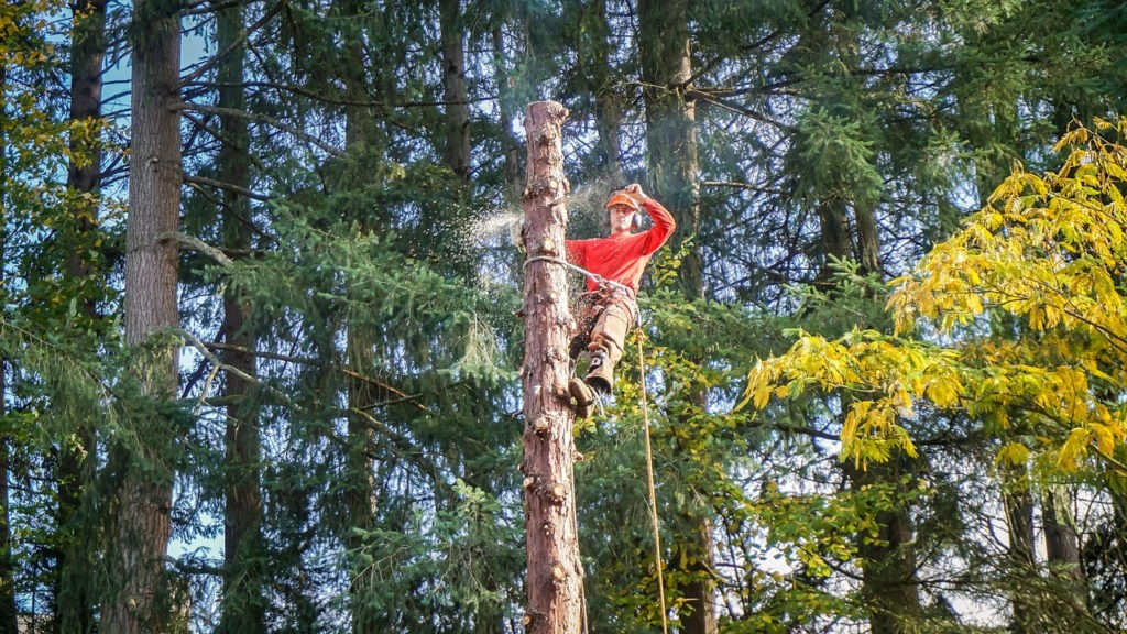How much is tree removal-Palm Beach County Tree Trimming and Tree Removal Services-We Offer Tree Trimming Services, Tree Removal, Tree Pruning, Tree Cutting, Residential and Commercial Tree Trimming Services, Storm Damage, Emergency Tree Removal, Land Clearing, Tree Companies, Tree Care Service, Stump Grinding, and we're the Best Tree Trimming Company Near You Guaranteed!