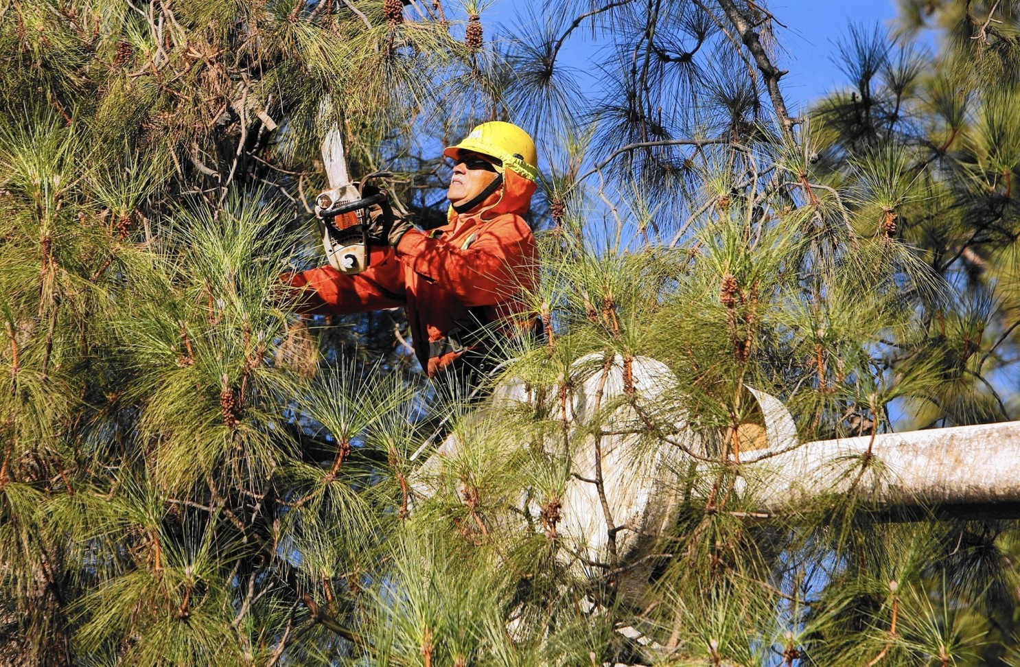 How much should Tree Trimming cost - Palm Beach County ...