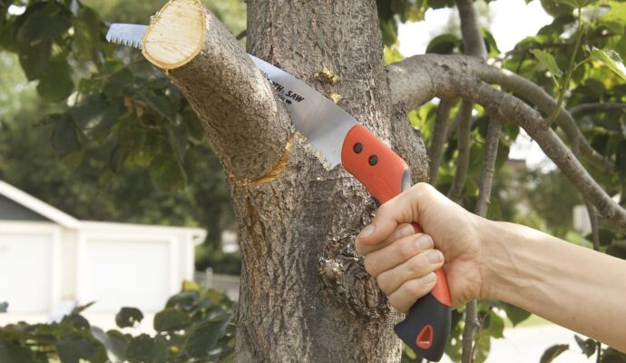 How to Trim a Tree-Palm Beach County Tree Trimming and Tree Removal Services-We Offer Tree Trimming Services, Tree Removal, Tree Pruning, Tree Cutting, Residential and Commercial Tree Trimming Services, Storm Damage, Emergency Tree Removal, Land Clearing, Tree Companies, Tree Care Service, Stump Grinding, and we're the Best Tree Trimming Company Near You Guaranteed!