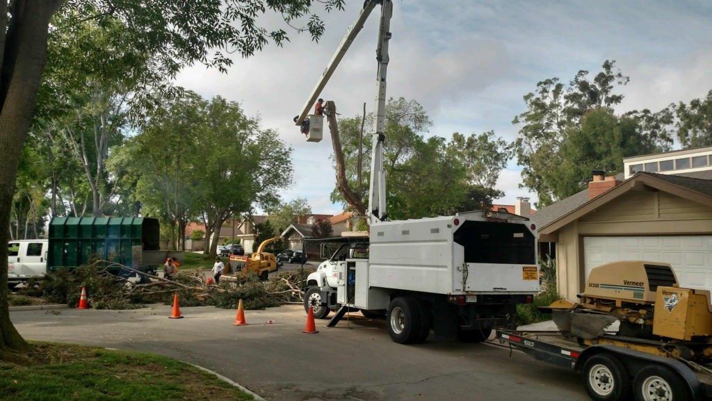 Large tree removal cost-Palm Beach County Tree Trimming and Tree Removal Services-We Offer Tree Trimming Services, Tree Removal, Tree Pruning, Tree Cutting, Residential and Commercial Tree Trimming Services, Storm Damage, Emergency Tree Removal, Land Clearing, Tree Companies, Tree Care Service, Stump Grinding, and we're the Best Tree Trimming Company Near You Guaranteed!