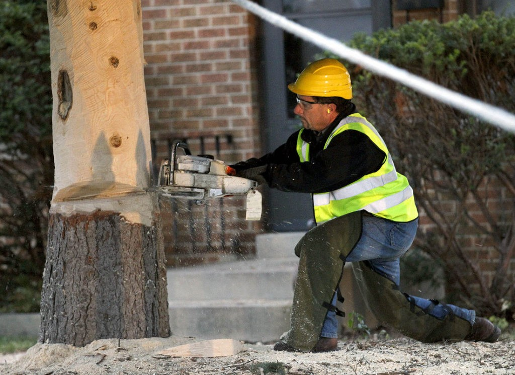 Local tree removal services-Palm Beach County Tree Trimming and Tree Removal Services-We Offer Tree Trimming Services, Tree Removal, Tree Pruning, Tree Cutting, Residential and Commercial Tree Trimming Services, Storm Damage, Emergency Tree Removal, Land Clearing, Tree Companies, Tree Care Service, Stump Grinding, and we're the Best Tree Trimming Company Near You Guaranteed!