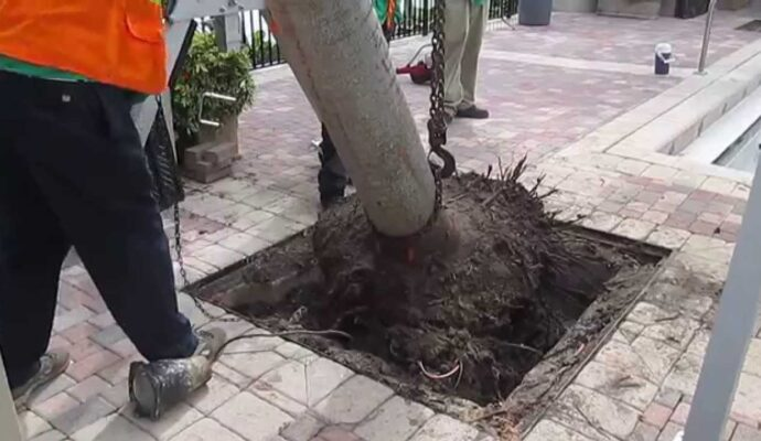 Palm Tree Removal near me-Palm Beach County Tree Trimming and Tree Removal Services-We Offer Tree Trimming Services, Tree Removal, Tree Pruning, Tree Cutting, Residential and Commercial Tree Trimming Services, Storm Damage, Emergency Tree Removal, Land Clearing, Tree Companies, Tree Care Service, Stump Grinding, and we're the Best Tree Trimming Company Near You Guaranteed!