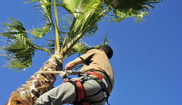 Palm Tree Trimming Near Me-Palm Beach County Tree Trimming and Tree Removal Services-We Offer Tree Trimming Services, Tree Removal, Tree Pruning, Tree Cutting, Residential and Commercial Tree Trimming Services, Storm Damage, Emergency Tree Removal, Land Clearing, Tree Companies, Tree Care Service, Stump Grinding, and we're the Best Tree Trimming Company Near You Guaranteed!