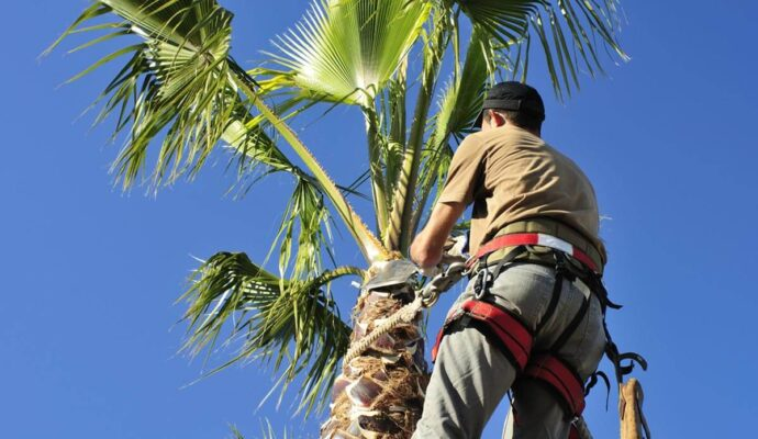 Palm Tree Trimming & Palm Tree Removal-Palm Tree Trimming & Palm Tree Removal-We Offer Tree Trimming Services, Tree Removal, Tree Pruning, Tree Cutting, Residential and Commercial Tree Trimming Services, Storm Damage, Emergency Tree Removal, Land Clearing, Tree Companies, Tree Care Service, Stump Grinding, and we're the Best Tree Trimming Company Near You Guaranteed!