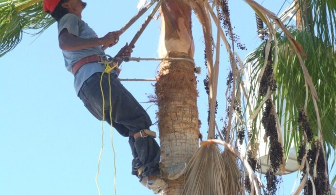 Palm tree cutting service-Palm Beach County Tree Trimming and Tree Removal Services-We Offer Tree Trimming Services, Tree Removal, Tree Pruning, Tree Cutting, Residential and Commercial Tree Trimming Services, Storm Damage, Emergency Tree Removal, Land Clearing, Tree Companies, Tree Care Service, Stump Grinding, and we're the Best Tree Trimming Company Near You Guaranteed!