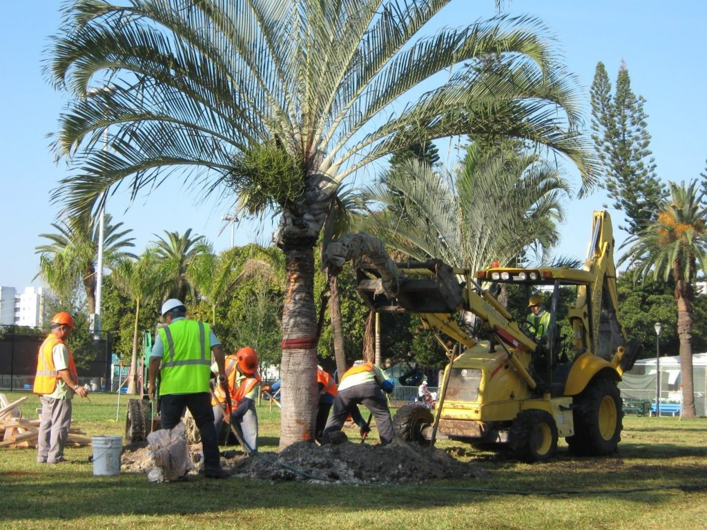 Palm tree service-Palm Beach County Tree Trimming and Tree Removal Services-We Offer Tree Trimming Services, Tree Removal, Tree Pruning, Tree Cutting, Residential and Commercial Tree Trimming Services, Storm Damage, Emergency Tree Removal, Land Clearing, Tree Companies, Tree Care Service, Stump Grinding, and we're the Best Tree Trimming Company Near You Guaranteed!