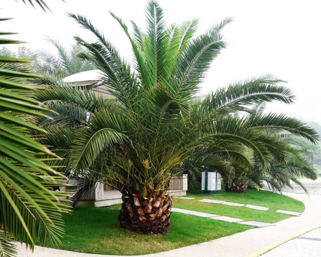 Palm tree service costs-Palm Beach County Tree Trimming and Tree Removal Services-We Offer Tree Trimming Services, Tree Removal, Tree Pruning, Tree Cutting, Residential and Commercial Tree Trimming Services, Storm Damage, Emergency Tree Removal, Land Clearing, Tree Companies, Tree Care Service, Stump Grinding, and we're the Best Tree Trimming Company Near You Guaranteed!